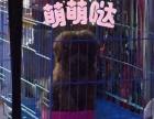 狗博士宠物会所五一狗粮用品零食(三送一)截止至7号