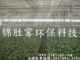 贵州锦胜提供高质量大棚农业喷淋喷雾灌溉,降温增湿环保驱虫无毒