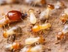 从化白蚁防治消杀治理