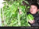 山东聊城莘县董杜庄山王庄西瓜蔬菜交易市场
