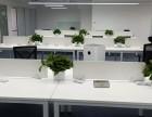 北京花卉绿植租摆租赁公司