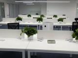 北京花卉綠植租擺租賃公司