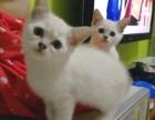 家养宠物猫猫找新家