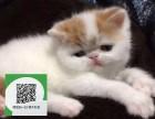 深圳在哪里卖健康纯种宠物猫 深圳哪里出售加菲猫