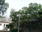石林 石林县北大村长夸村 厂房 4000平米