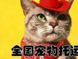 放心寵物托運專業的寵物托運全國范圍內皆可托運