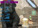 宠物店和狗市里的拉布拉多可以买吗 健康的多少钱一只