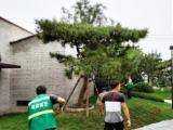 綠化苗木、綠化養護、廠區綠化施工、私家花園屋頂綠化
