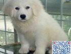 重庆哪里有卖大白熊的 大白熊一只多少钱