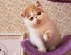 哈尔滨哪里有波斯猫卖 纯种 无病无廯 协议质保