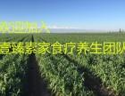 杭州萧山余杭黑金谷素食食疗餐野生血钻野燕麦种植基地批发价格