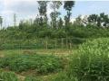 现有成都市锦江区10亩耕地低价出租,可做草莓采摘园