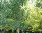 出售绿化土 回填土 价格全市较低 有苗圃可参观