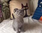 西安哪里卖蓝猫 西安哪里的蓝猫便宜 西安纯种蓝猫价格