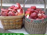 红菌之乡 藤县象棋特产野生大红菌 野生食用菌批发 珍稀红姑产地