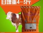 烏魯木齊牛飼料哪家好 肉牛催肥飼料 暢銷品牌 生產質量有保證