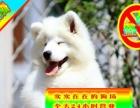 萨摩幼犬——送狗用品——24小时营业——可刷卡
