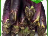 健烘基地热销推荐 新鲜茄子绿色蔬菜 无公害新鲜特色蔬菜批发
