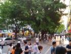 南头学府路正街旺铺转让 近地铁站 南山医院客流集中