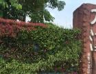 东莞专业修剪砍伐大树绿化树,绿化养护,草皮修剪维护