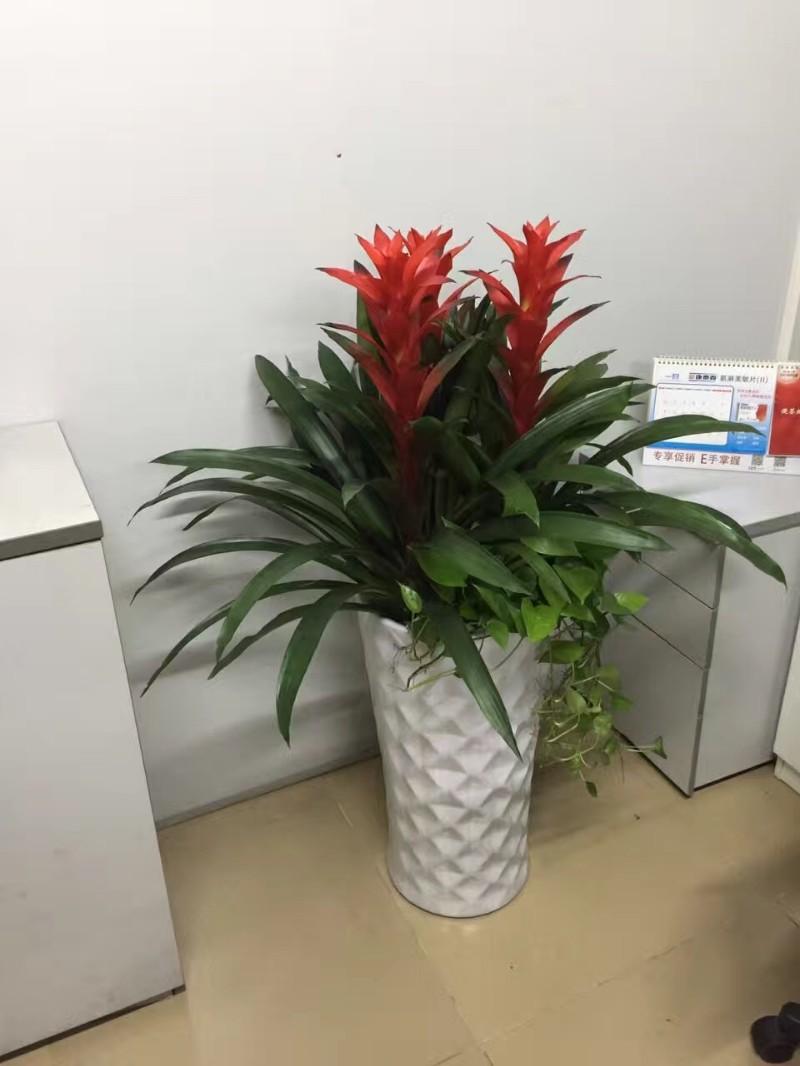 花卉租摆价格-最新花卉租摆价格、批发报价、价格大全 - 阿里巴巴