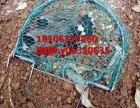 泉城笼业大网兜斑鸠拍网打笼野鸡拍鸟网直径40可批发