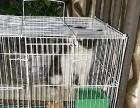 小猫免费求好心人领养
