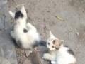 小奶猫求收养