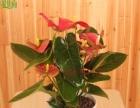 室内植物设计–––除甲醛