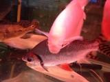 专业治疗各种观赏鱼疾病 调节各种鱼缸水质
