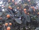 龙泉摘樱桃草莓枇杷桃子,龙泉农家乐哪家好,自助烧烤,垂钓