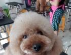 临沂宠物美容宠物美容服务 山东宠物美容师基地