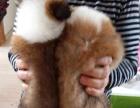 永盛犬业十多年的养殖经验 养殖纯种苏牧幼犬 当面测试交易