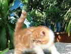 赠送自家养的小宠物加菲猫