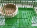 大小号兔笼兔粮兔兔全套用品