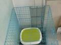 低价转让全套猫笼猫砂盆猫碗