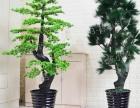 仿真植物盆栽绿萝招财树客厅塑料花大摆件松树室内装饰迎客松盆景