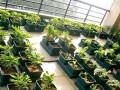天津思路达屋顶菜园屋顶阳台绿化自动灌溉叶菜盆