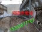 河南兰考肉兔价格,獭兔养殖场