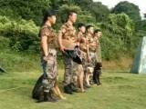 广州宠物狗狗寄养训练职业训犬师培训