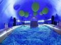 鲸鱼岛海洋球蓝鲸鱼出租租赁