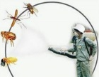 潍坊专业灭蟑螂 灭鼠 蚊蝇等虫害