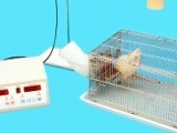 热刺痛仪 福尔马林疼痛分析系统 疼痛分析系统 鼠尾测痛仪