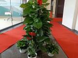 天津花卉租摆公司 天津绿植盆栽公司 天津办公室花卉租摆公司