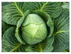 收费标准强烈推荐餐餐菜,西区蔬菜配送公司