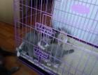 自己家小猫找新家