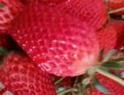 草莓香瓜采摘园