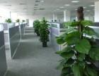 雄安新区植物租摆公司丨花卉租赁公司丨租花公司丨绿植养护公司