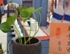 茶艺培训 茶艺师 评茶员 茶艺表演 茶道