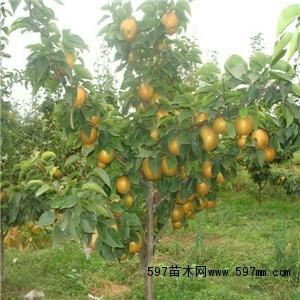 郑州上街区310国道附近有百亩果园转让或出租